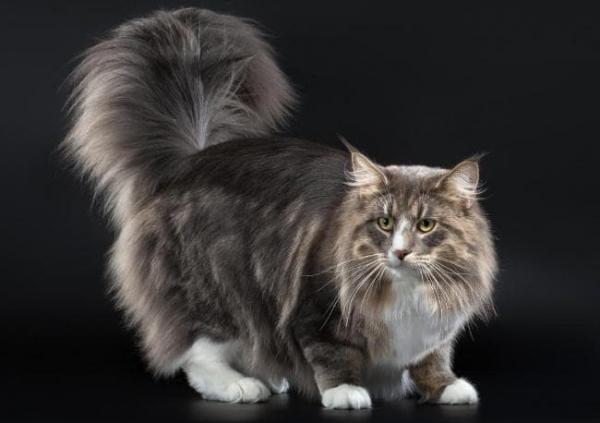 nahé mačička diera galérie čiernej mačička